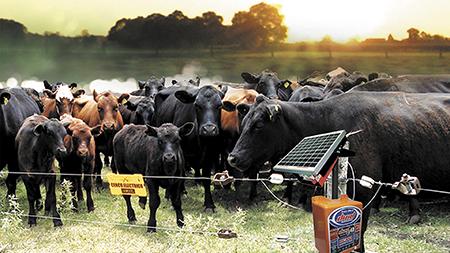 cercas electricas para ganado