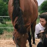 caballo cojo caballo con renguera