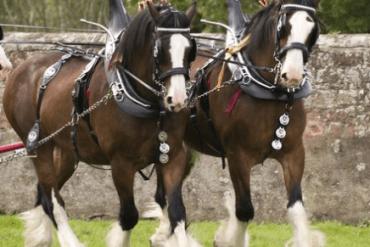 El auge de la ganadería en el Caquetá