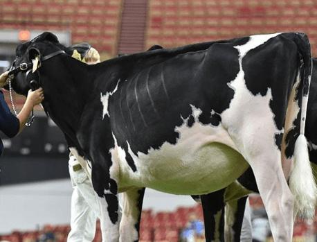 Tratamiento de parásitos internos del ganado