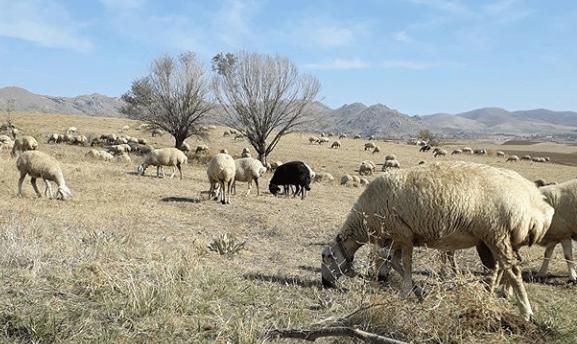 que es la ganadería definición