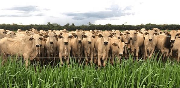Interpretación de RFV de Grass Hay