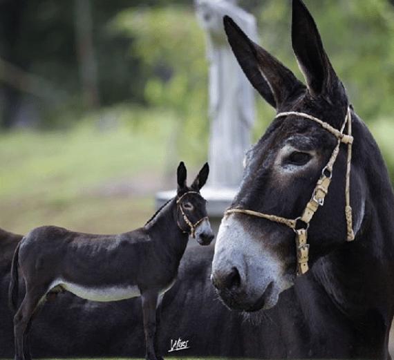 imagen fotografía de un burro