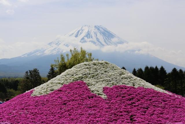 monte fuji, shibasakura colores