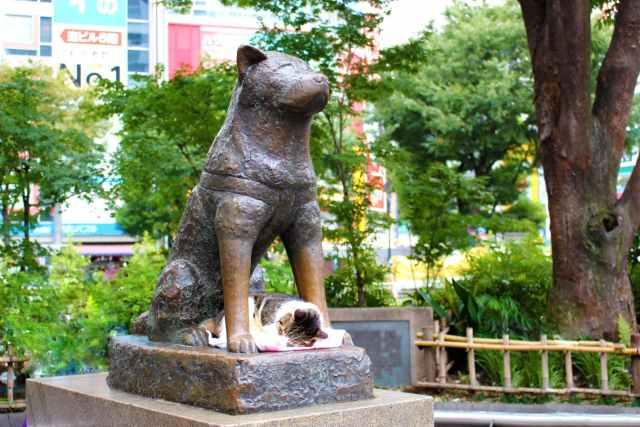 estatua hachiko shibuya statue