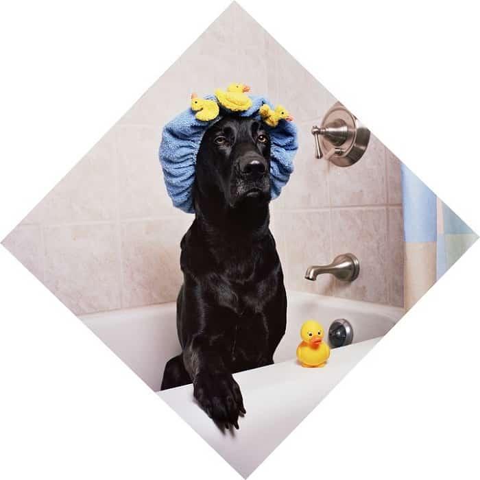 Prepara a tu perro para su baño