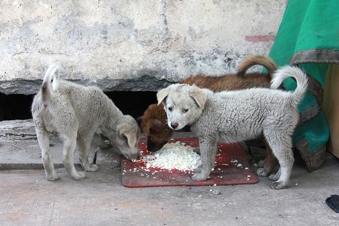 Enséñale a tu perro a esperar su comida
