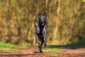 ¿Cómo tener un perro sano y fuerte?
