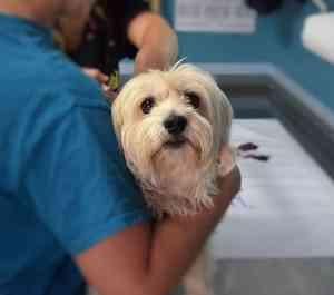 ¿Por qué vacunar a mi perro?