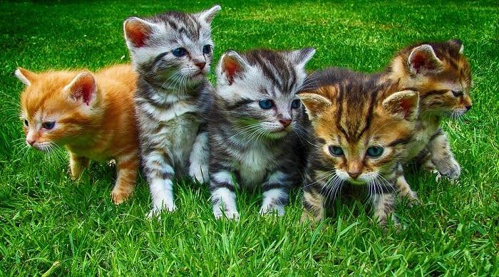 gatos grupo