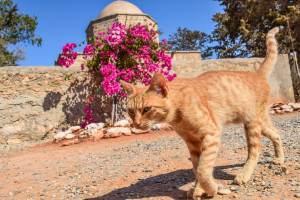 Por qué mi gato camina de lado