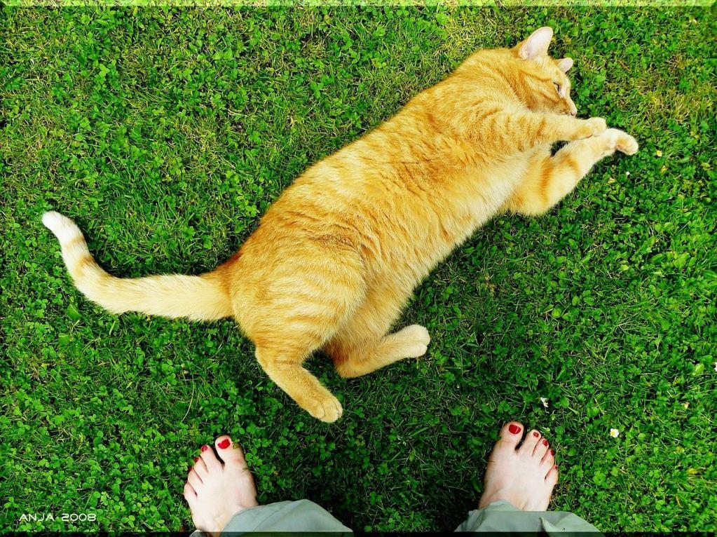 Por qué mi gato ataca mis pies