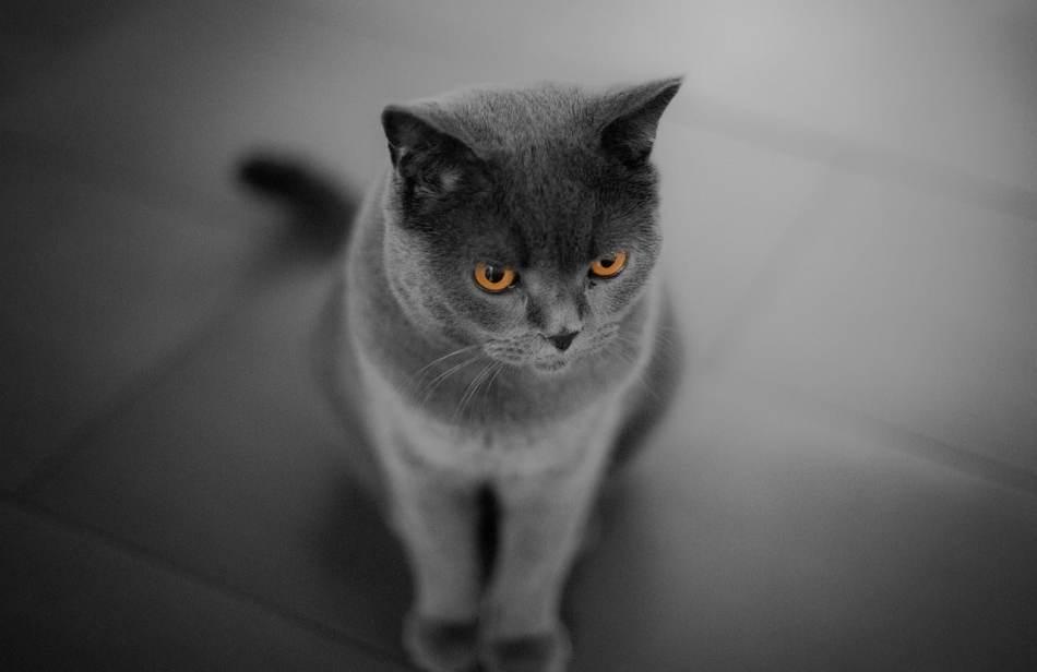 Por qué mi gato estornuda