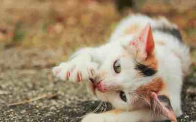 Cómo saber si mi gato esta envenenado