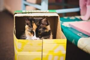 Por qué los gatos aman las cajas