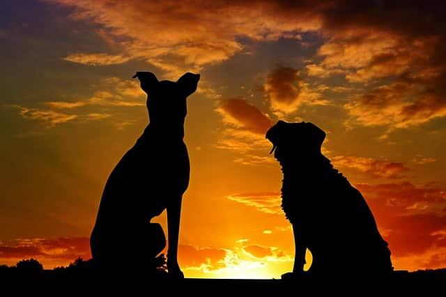 Dónde encontrar su nuevo amigo canino