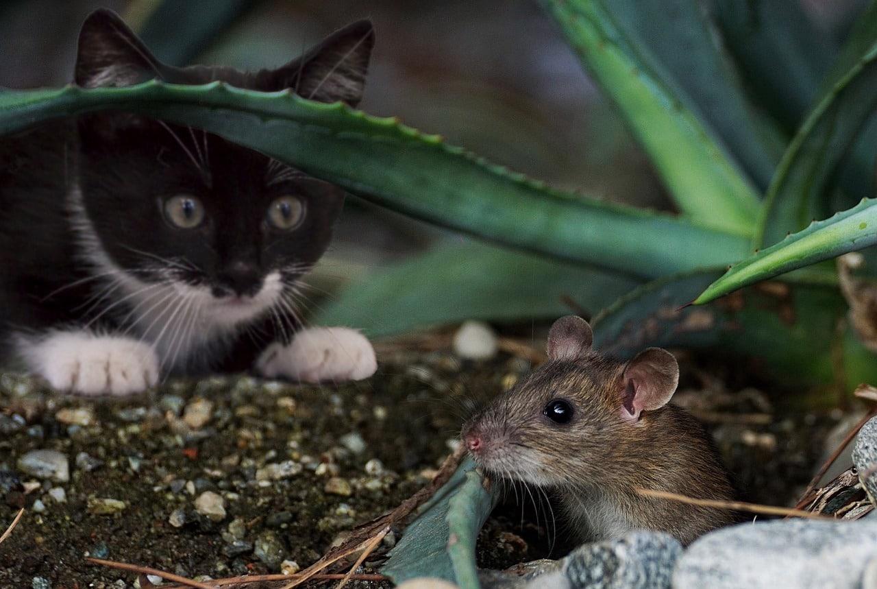 Resultado de imagen para gatos cazando su presa