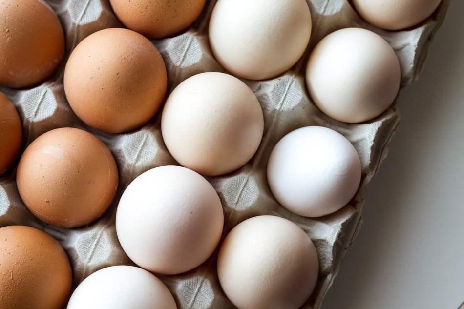 los perros pueden comer huevos