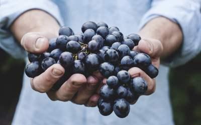 los perros pueden comer uvas