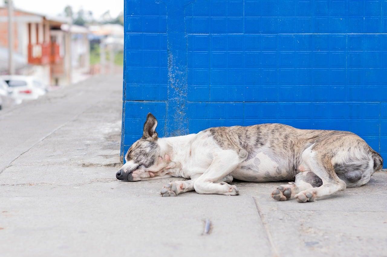 Parasitos intestinales en perros sintomas