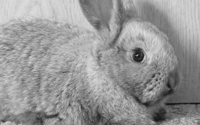 Alimentos prohibidos para conejos