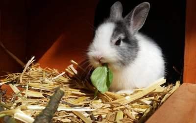 los conejos muerden