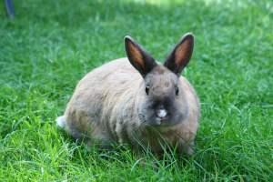 Los conejos son mamíferos
