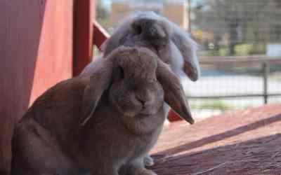 Nombres para conejos