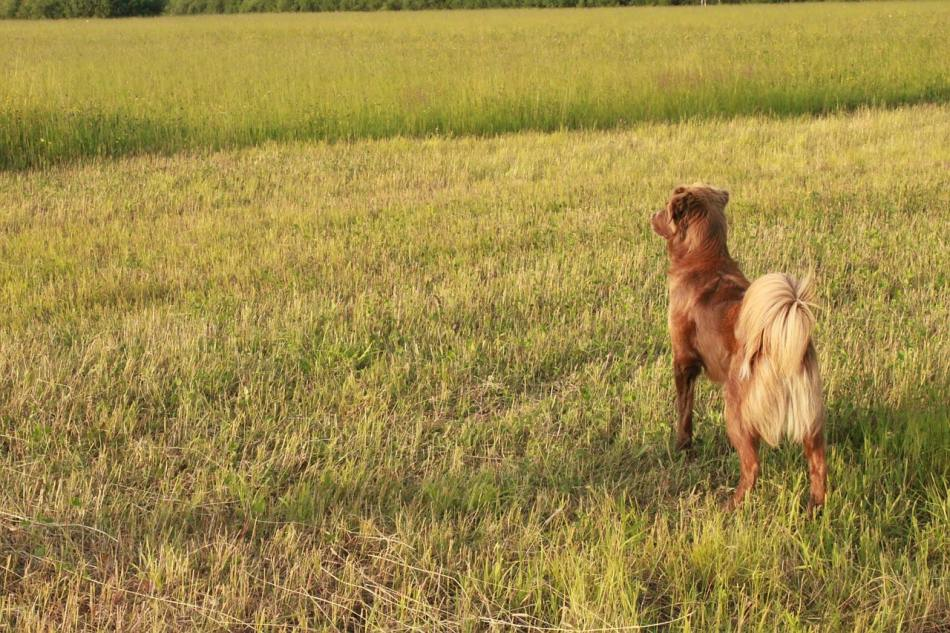 Por qué los perros mueven la cola