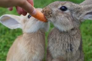 Qué comen los conejos