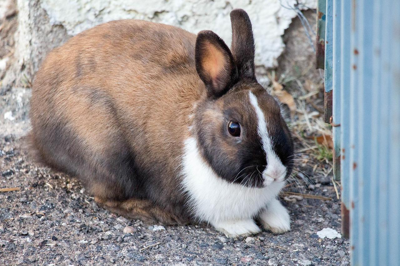 a los conejos se les cortan las uñas