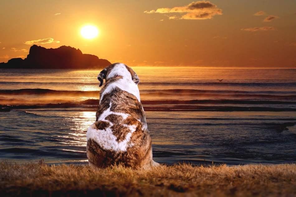 los perros van al cielo