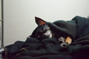 mi perro duerme mucho
