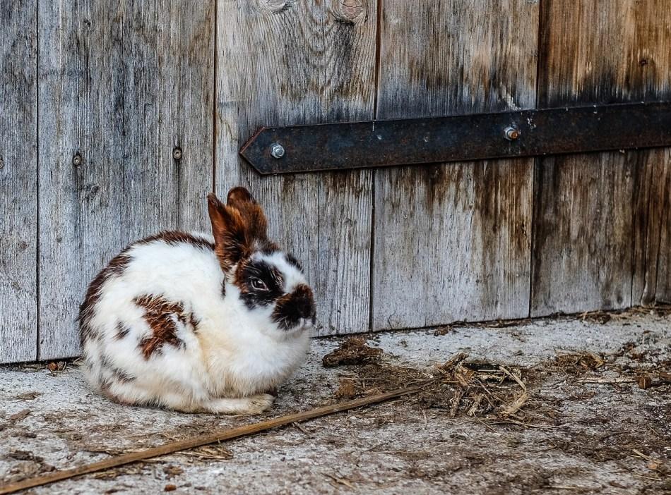 nombres para conejos machos