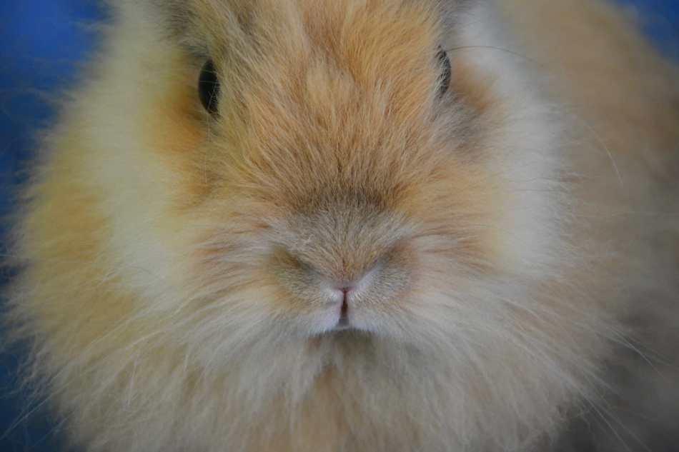 Sentido del olfato de los conejos