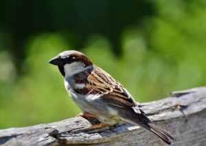 Cómo orinan las aves