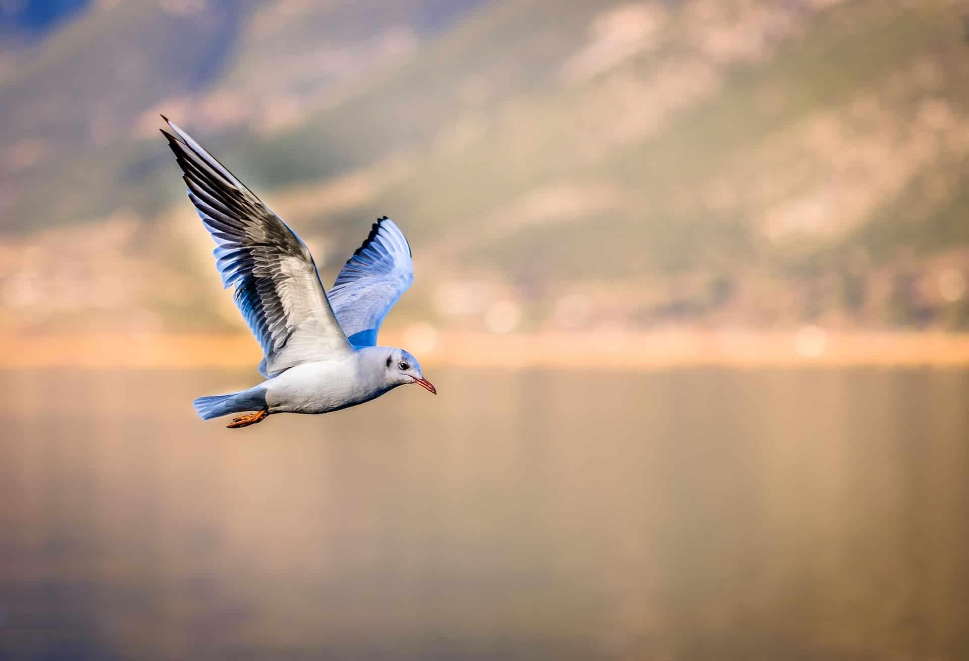 Por qué vuelan las aves