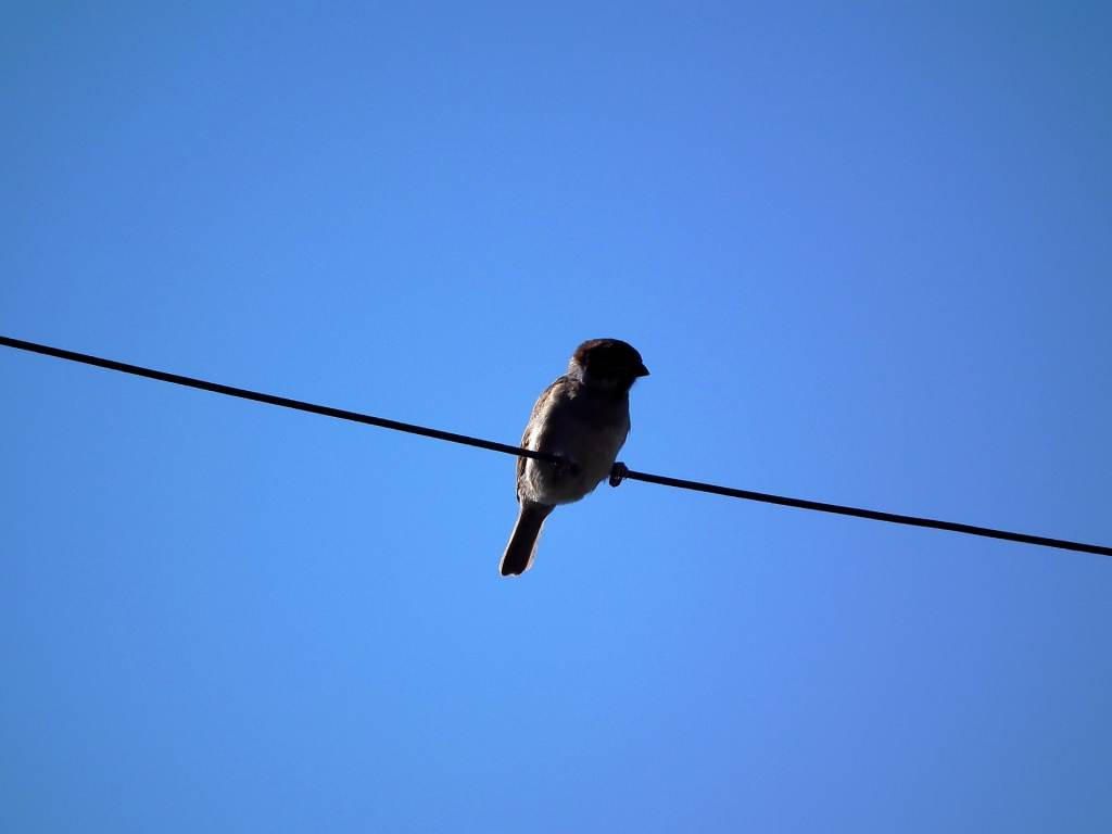 por qué las aves no se electrocutan