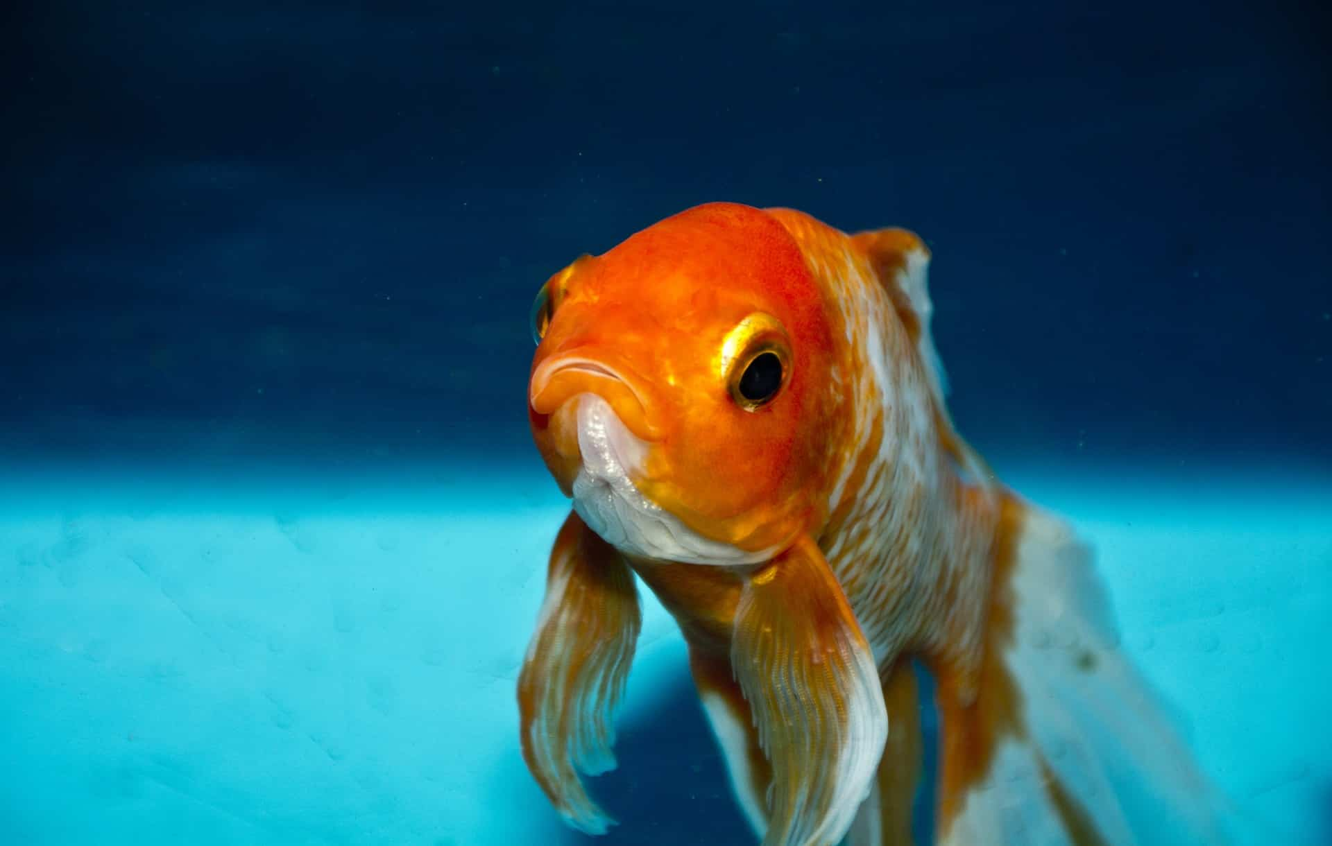 por qué se mueren mis peces