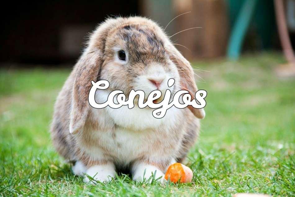 Todo sobre conejos