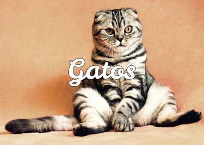 Todo sobre gatos