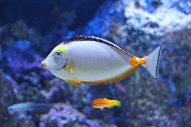 Curiosidades de los peces