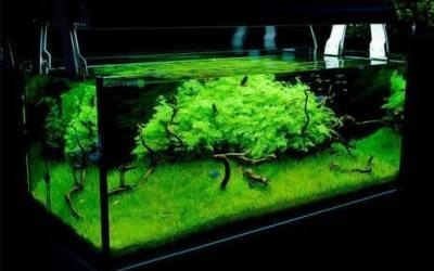 cómo iluminar un acuario