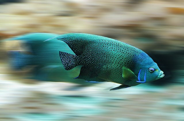 Algunas preguntas que tendrá que hacerse antes de tener un acuario en casa