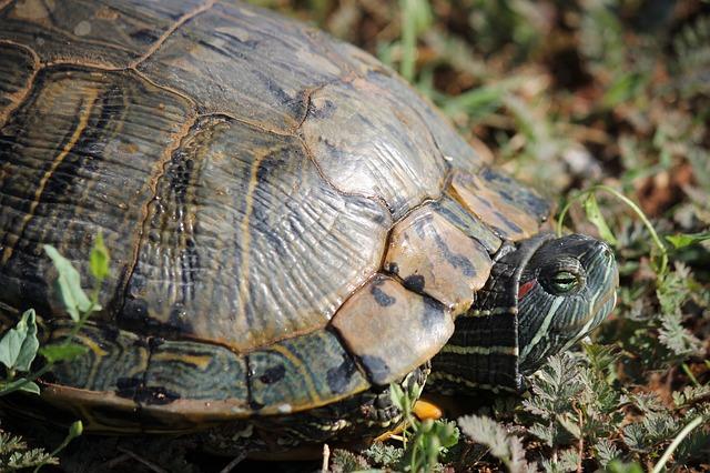 Curiosidades de las tortugas