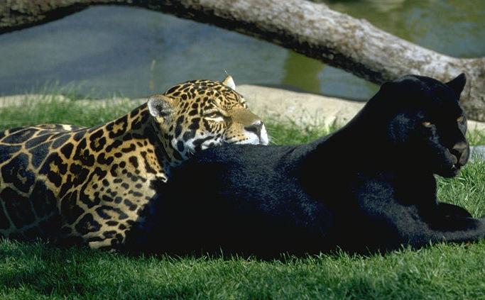 Animales Sin Futuro.... ¡¡¡Por Culpa Del Hombre!!! (1/2)