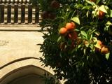 Sevilla_oranges