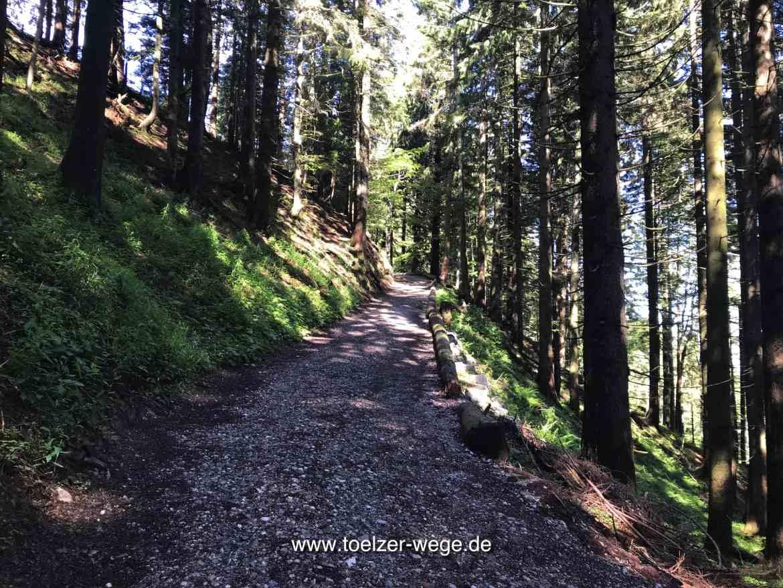toelzer wege aktivwege blomberghaus bad toelz steiler bergwald