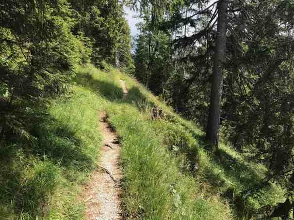 toelzer wege toelzer huette bergwald