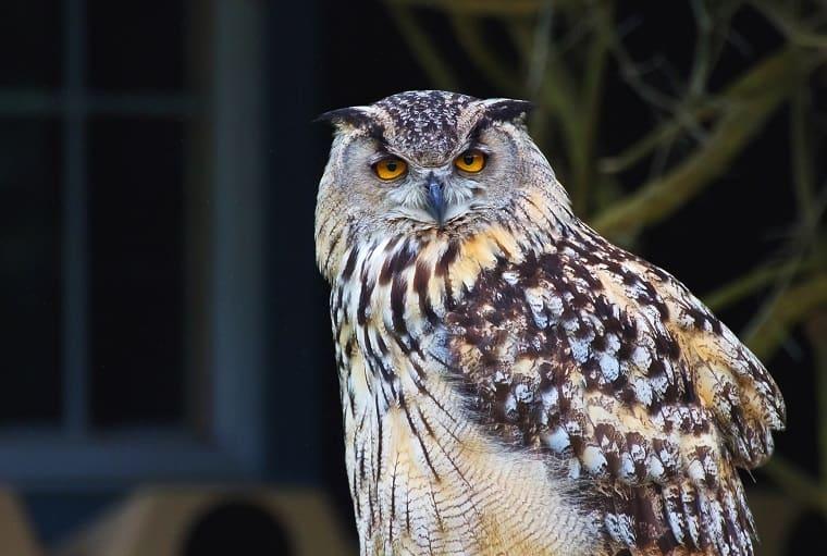 WIse as an owl - wisdom